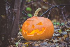 Halloween pumpkin in autumn forest. Selective focus Stock Images
