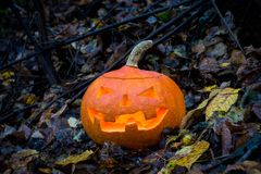 Halloween pumpkin in autumn forest. Selective focus Royalty Free Stock Photography