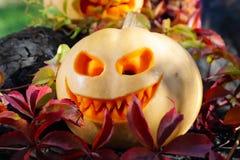 Halloween pumpkin in autumn leaves Royalty Free Stock Photos