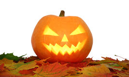 Halloween pumpkin on autumn leaves isolated Royalty Free Stock Photography