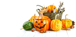 Halloween pumpkin autumn still life at holiday Royalty Free Stock Photo
