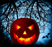 Halloween pumpkin background Stock Image