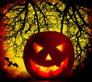 Halloween pumpkin background Stock Images