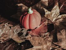 Halloween pumpkin background. fall parties royalty free stock photo