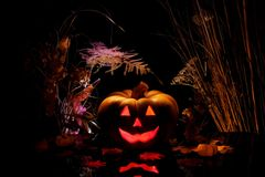 Halloween pumpkin on black. Royalty Free Stock Photos