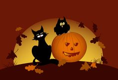 Halloween pumpkin and black cat Stock Image