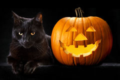 Halloween pumpkin black cat. Halloween pumpkin and black cat scary spooky and creepy horror holiday superstition evil animal and jack lantern royalty free stock photo