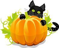 Halloween pumpkin and black cat Royalty Free Stock Photo