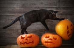 Halloween pumpkin and black cat Stock Images