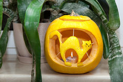 Halloween pumpkin with carved cat Royalty Free Stock Image
