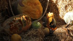 Halloween pumpkin carving stock video footage