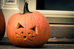 Halloween pumpkin cat Stock Images