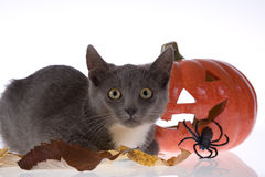 Halloween pumpkin and cat Stock Photo