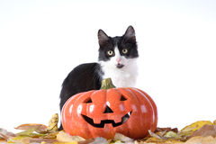 Halloween pumpkin and cat Royalty Free Stock Photography