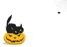 HALLOWEEN PUMPKIN WITH A CAT INSIDE AND A SPIDER. Hanging from the wall Stock Image