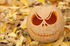Halloween pumpkin close up on golden leaves. Halloween pumpkin close up on golden autumn leaves Royalty Free Stock Photography