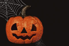 Halloween pumpkin with cobwebs Royalty Free Stock Photo