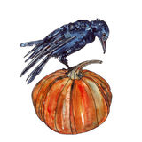 Halloween pumpkin and crow in watercolor Royalty Free Stock Image