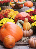 Halloween pumpkin decoration. Holiday decoration with pumpkins and flowers Stock Photo