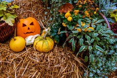Halloween pumpkin decoration at autumn Stock Photography