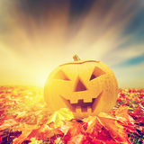 Halloween pumpkin in fall, autumn leaves Stock Photos