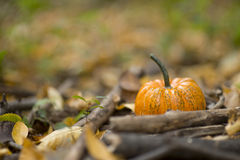 Halloween pumpkin in a fall nature environment royalty free stock photos