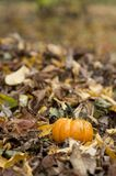 Halloween pumpkin in a fall nature environment stock photos