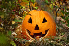 Halloween pumpkin on fallen autumn leaves with smile on his face Royalty Free Stock Images