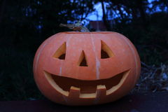 Halloween pumpkin. In the Forest Stock Photography
