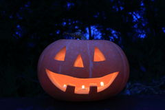Halloween pumpkin. In the Forest Stock Image