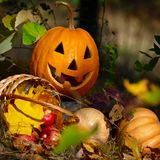 Halloween Pumpkin in the forest Royalty Free Stock Photography