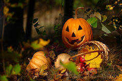 Halloween Pumpkin in the forest. On a dark background royalty free stock images