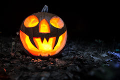 Halloween pumpkin in a forest at night. Halloween pumpkin on leaves in a forest at night Stock Image