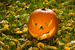 Halloween pumpkin in the garden Royalty Free Stock Photography