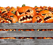 Halloween Pumpkin Harvest Royalty Free Stock Photography
