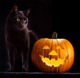 Halloween pumpkin head and black cat. Scary spooky and creepy horror holliday superstition evil animal and jack lantern stock photos