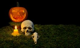 Halloween pumpkin, human skull, animal skull, and candles glowing in the dark on a forest moss. stock image