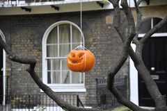 Halloween pumpkin hung down from a tree in front of a Georgian house. stock image