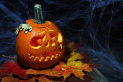 Halloween pumpkin jack-o-lantern Royalty Free Stock Photos