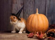 Halloween pumpkin jack-o-lantern and ginger kitten on black wood Royalty Free Stock Images