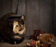 Halloween pumpkin jack-o-lantern and ginger kitten on black wood. Background Stock Photo