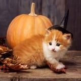 Halloween pumpkin jack-o-lantern and ginger kitten on black wood. Background royalty free stock images