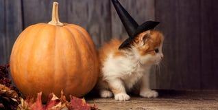 Halloween pumpkin jack-o-lantern and ginger kitten on black wood. Background royalty free stock photography
