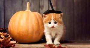 Halloween pumpkin jack-o-lantern and ginger kitten on black wood. Background royalty free stock photo