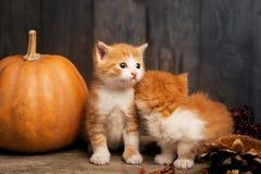 Halloween pumpkin jack-o-lantern and ginger kitten on black wood Stock Images