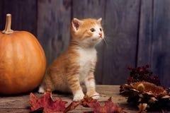 Halloween pumpkin jack-o-lantern and ginger kitten on black wood Royalty Free Stock Photos