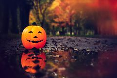 Halloween pumpkin, jack o lantern Royalty Free Stock Images