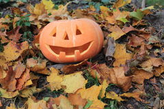Halloween pumpkin. In the leaves Stock Photos