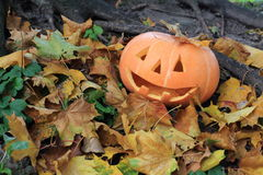 Halloween pumpkin. In the leaves Stock Image
