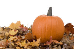 Halloween Pumpkin and Leaves Royalty Free Stock Photos